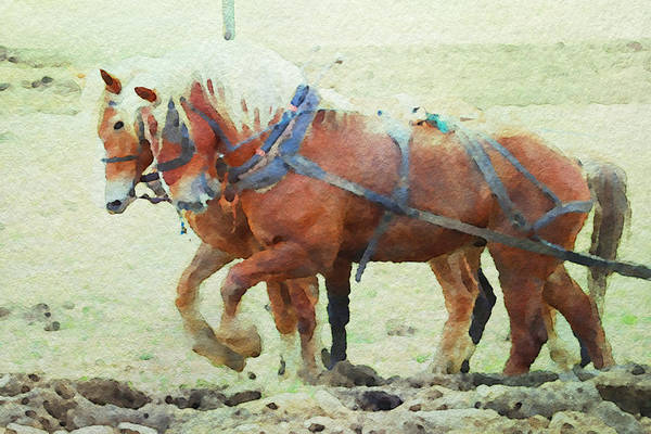 Photograph - Double Team Plowing by Alice Gipson