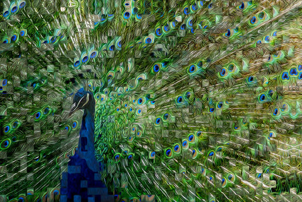 Peafowl Painting - Double Vision by Jack Zulli