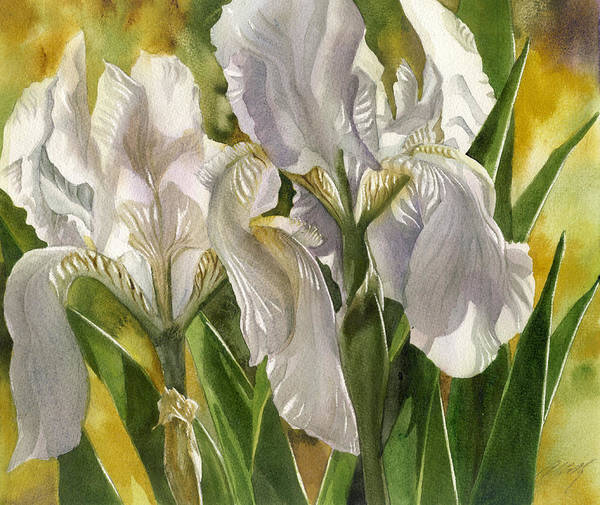Painting - Double White Iris by Alfred Ng