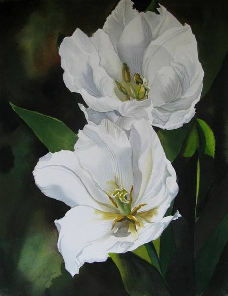 Painting - Double White Tulips by Alfred Ng