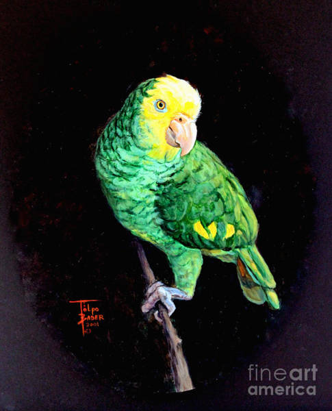 Painting - Double Yellow Headed Amazon Paco by Art By - Ti   Tolpo Bader
