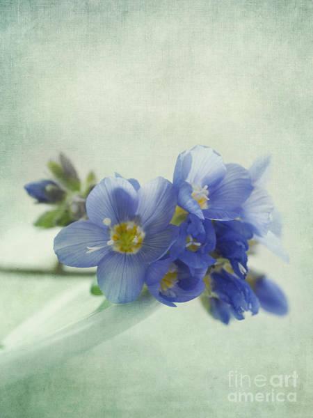 Shades Of Blue Wall Art - Photograph - Douceur by Priska Wettstein