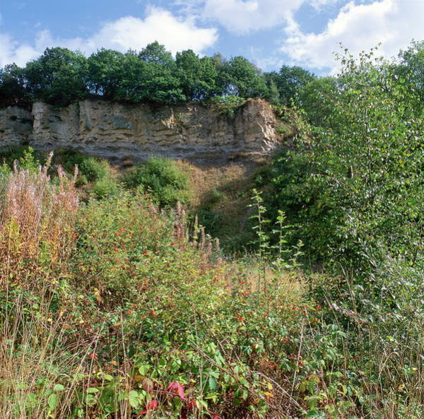 Inactive Photograph - Doulton's Claypit (sssi) by Robert Brook/science Photo Library