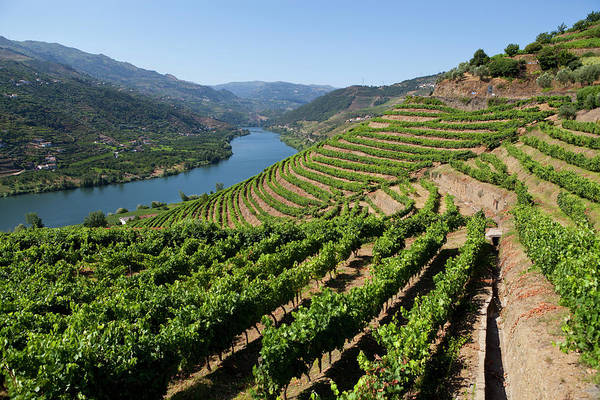 Patio Photograph - Douro Valley by Luisportugal