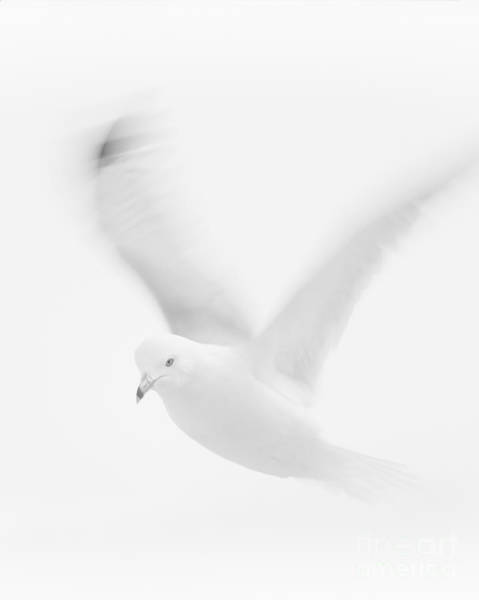 Wall Art - Photograph - Dove Impersonator by Roger Bailey