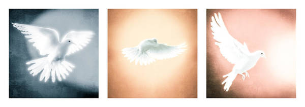 Holy Spirit Photograph - Dove In Flight Triptych by YoPedro