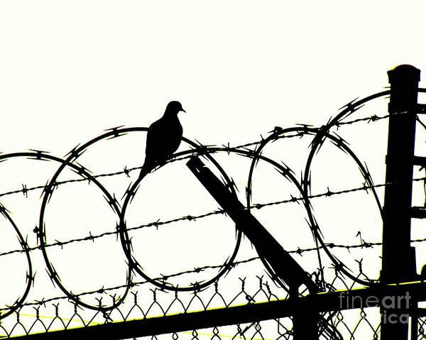Wire Wrap Photograph - Dove Mourning by Joe Pratt