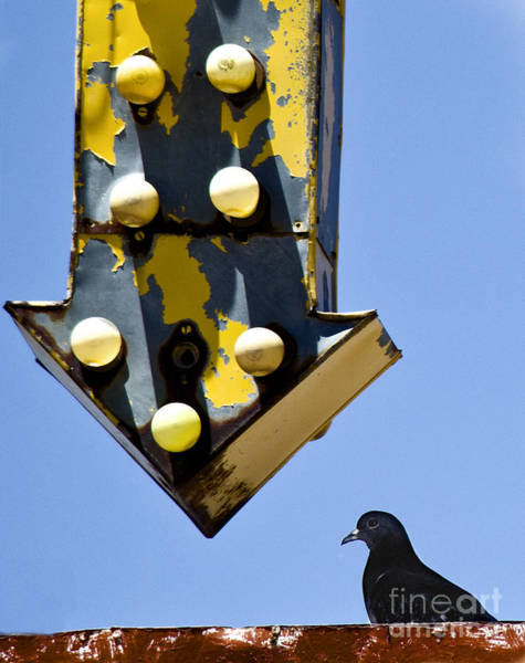 Photograph - Dove On Route 66 by Elena Nosyreva