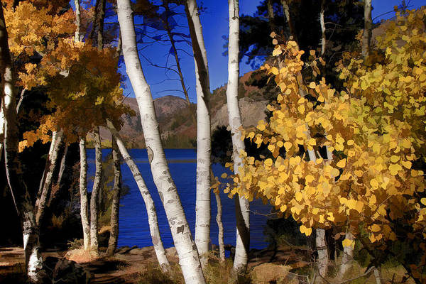 June Lake Photograph - Down By The Lake by Donna Kennedy