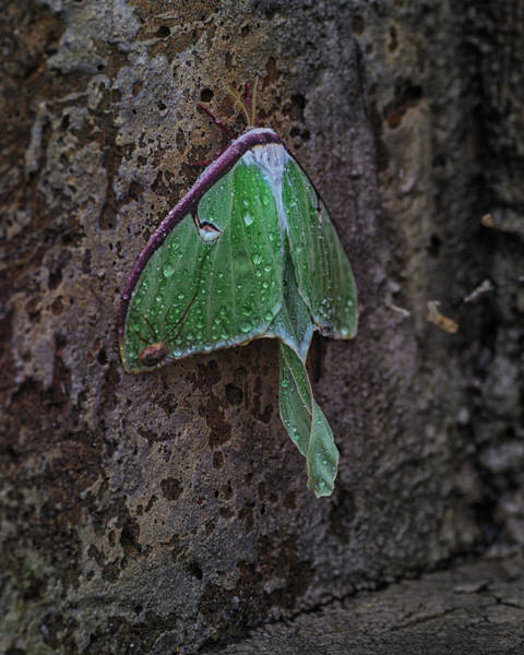 Moth Photograph - Down On The Corner by Susan Capuano