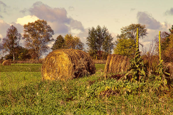 Photograph - Down On The Farm by Peggy Collins