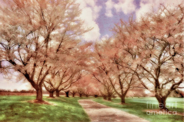 Photograph - Down The Cherry Lined Lane by Lois Bryan