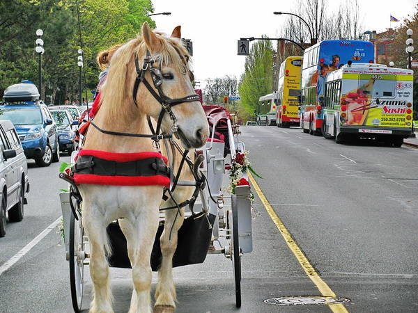 Photograph - Downtown Horses Buses And Cars by Simply  Photos