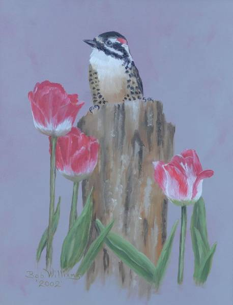 Painting - Downy Woodpecker by Bob Williams