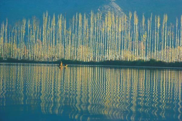 Dal Lake Photograph - Trees by Dinodia
