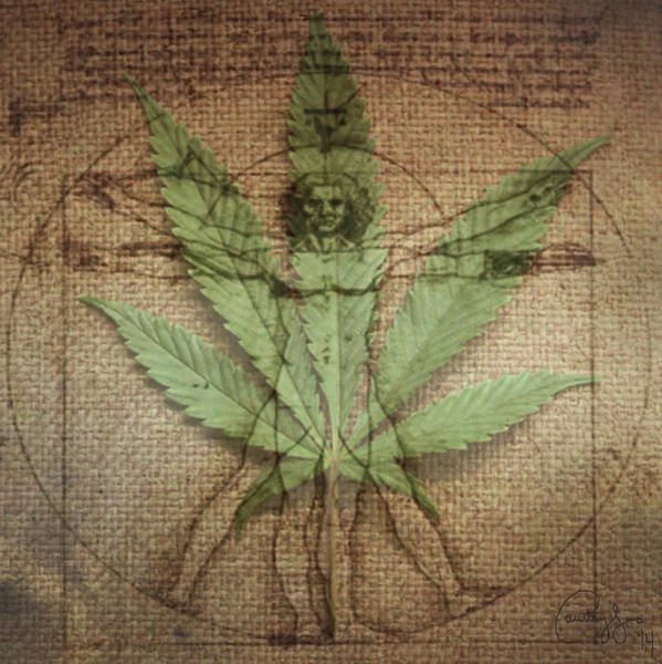 Medical Cannabis Mixed Media - Dr. Vitruvian by Courtney James