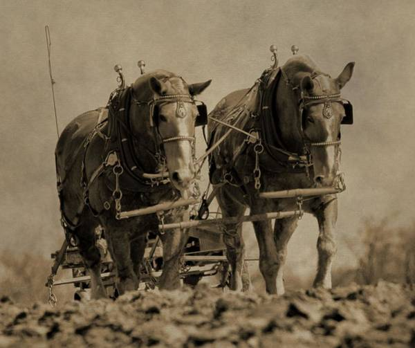 Plowing Photograph - Draft Horses by Dan Sproul