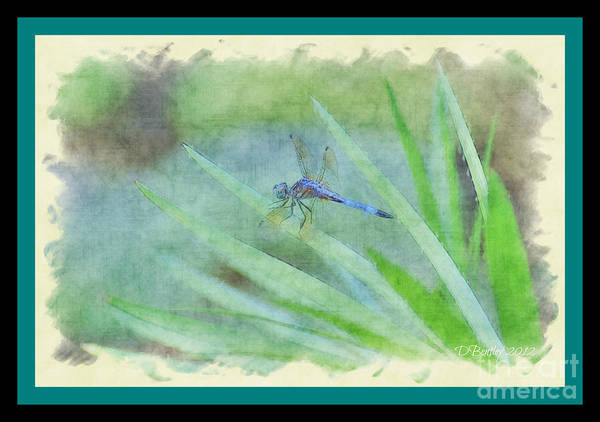Photograph - Dragon Fly by Donna Bentley