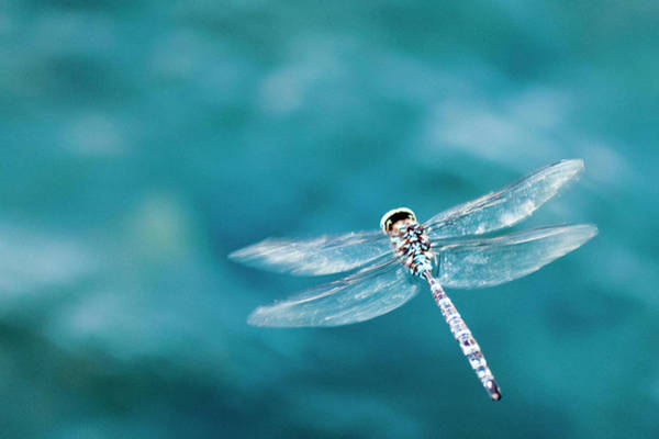 Blue Dragonfly Photograph - Dragon Fly Hovering Over Blue Water by James White