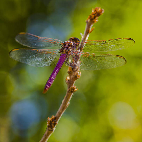Photograph - Dragon Fly Or Not by Scott Campbell