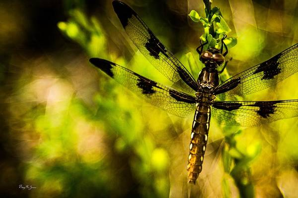 Photograph - Dragonfly - Dragon Waiting by Barry Jones