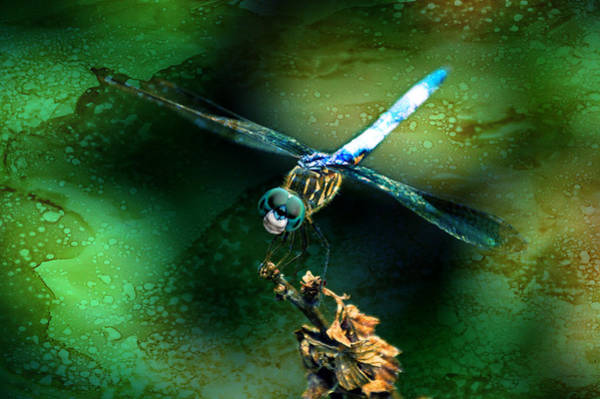 Mixed Media - Dragonfly Art By Lesa Fine by Lesa Fine