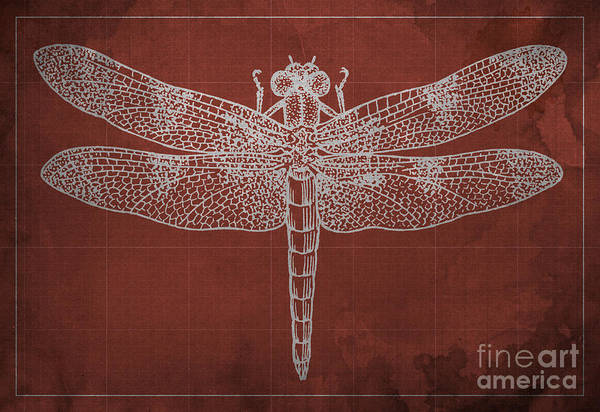 Dragonflies Digital Art - Dragonfly Blueprint Red by Drawspots Illustrations