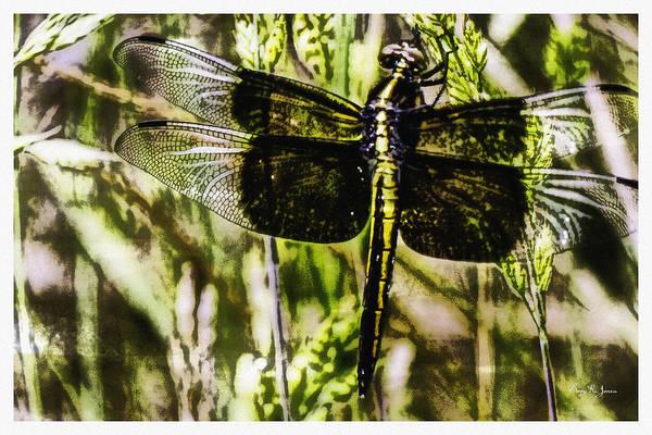 Digital Art - Dragonfly Essence by Barry Jones
