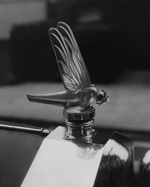 1932 Photograph - Dragonfly Hood Ornament by Martinus Andersen
