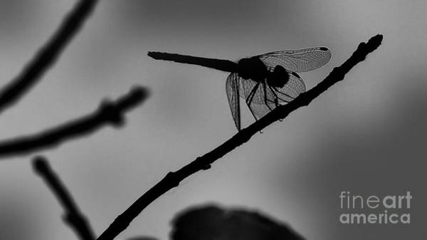Wall Art - Photograph - Dragonfly In Black And White by Frank Piercy