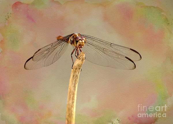 Photograph - Dragonfly In Fantasy Land by Sabrina L Ryan