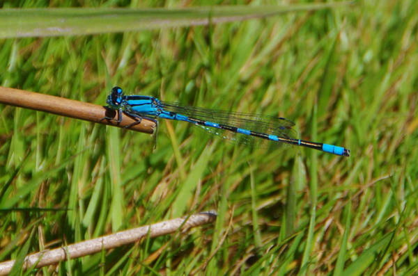 Photograph - Dragonfly by Marilyn Wilson