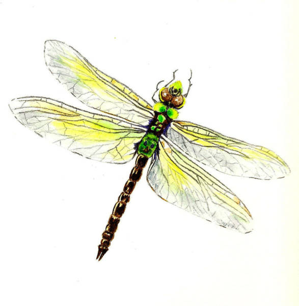 Wall Art - Painting - Dragonfly by Michael Vigliotti