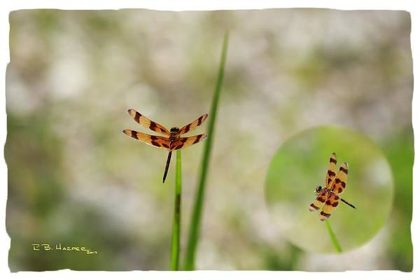 Photograph - Dragonfly by R B Harper