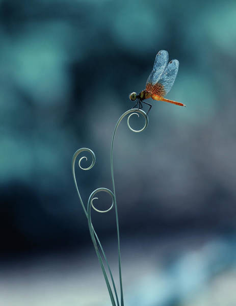 Wall Art - Photograph - Dragonfly by Ridho Arifuddin