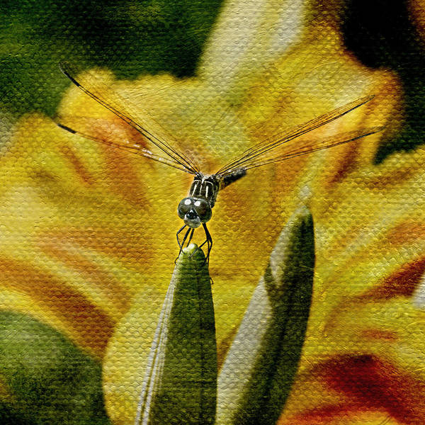 Tigerlily Wall Art - Photograph - Dragonfly Summer by Earthly Charms Photography
