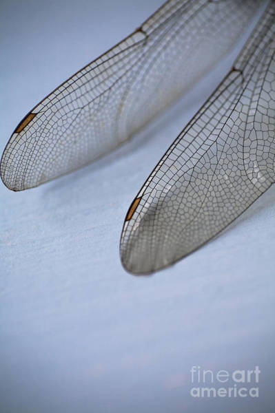 Blue Dragonfly Photograph - Dragonfly Wings by Jan Bickerton