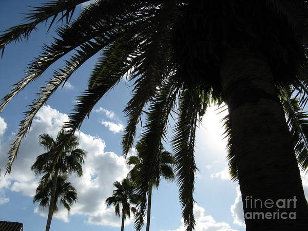 Photograph - Dramatic Palm by Jeanne Forsythe