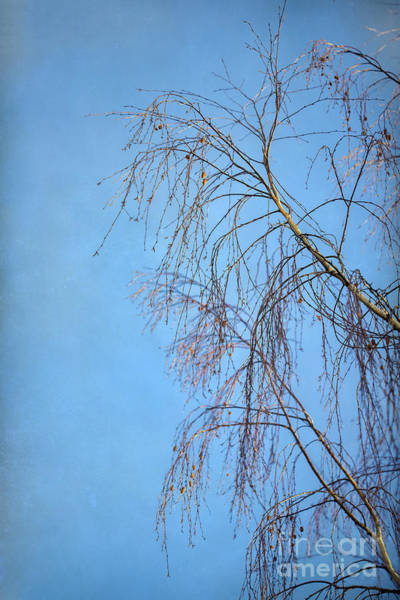 Wall Art - Photograph - Dream Blue by Evelina Kremsdorf