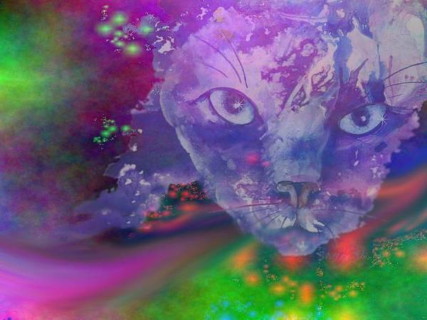 Photograph - Dream Cat by Sherry Shipley