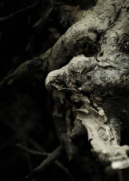 Wicca Photograph - Dream Chanter by Rebecca Sherman