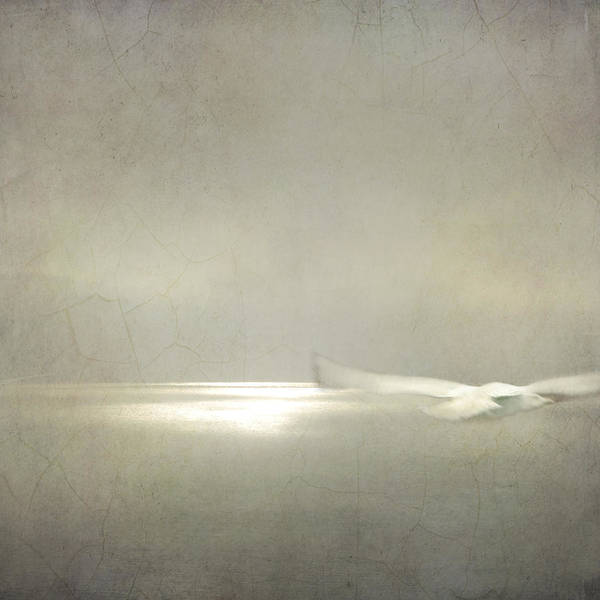 Photograph - Dream Flight by Sally Banfill