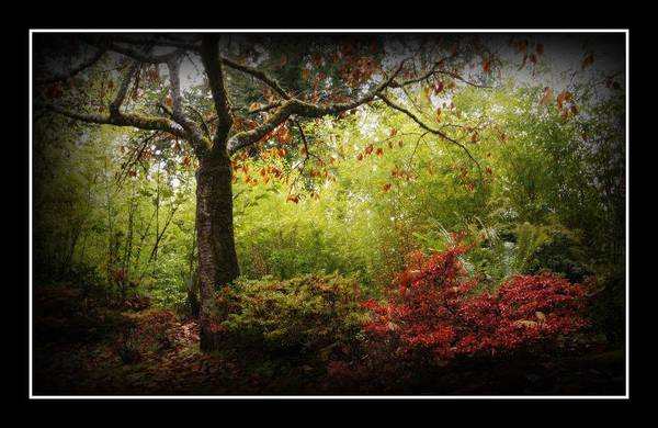 Photograph - Dream Garden by Patricia Strand
