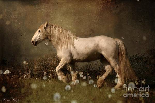 White Horse Photograph - Dream Guardian by Dorota Kudyba