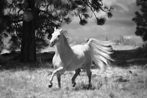 Photograph - Dream Horse by Wes and Dotty Weber