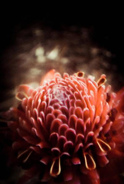 Dream In Bloom - Orange  Art Print