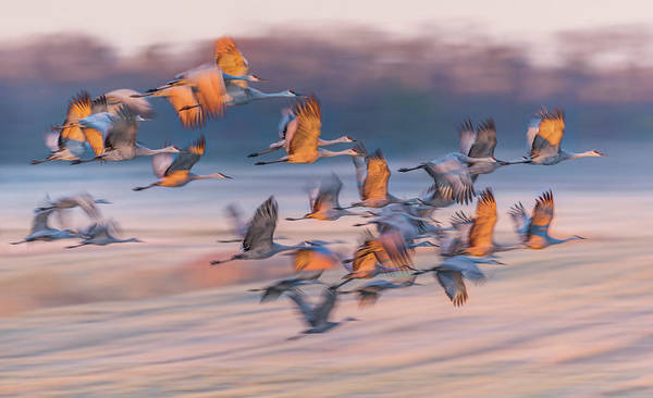 Flying Bird Photograph - Dream Of The South by Kevin Wang