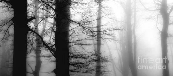Photograph - Dream by Yucel Basoglu