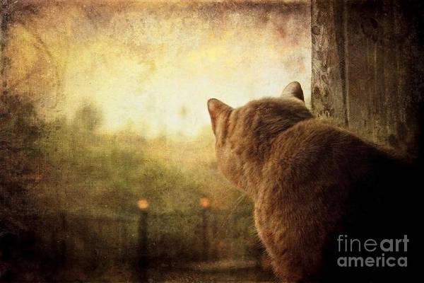 Miss You Photograph - Dreamer by Ellen Cotton