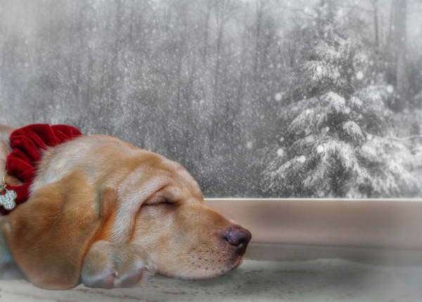 Yellow Lab Mixed Media - Dreamin' Of A White Christmas 2 by Lori Deiter